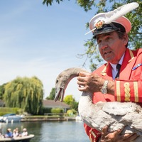 Swan Upping: All you need to know about a 900-year-old British tradition