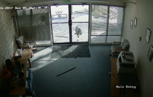 A goat is probably one of the more surprising vandals to break into your office