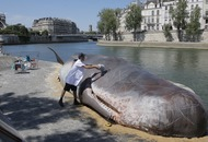 A beached whale stunt had Parisians confused over whether the washed-up predator was real or fake