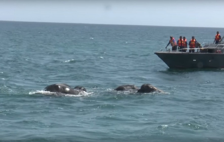 Two elephants saved in the middle of the sea in Sri Lanka