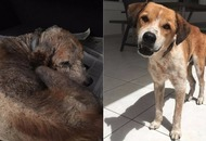 This rescue dog is completely unrecognisable after being showered with love and attention