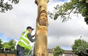 Dying trees transformed with Celtic carvings in Derry
