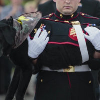 This US Marines dog was given a hero's parade in his final moments