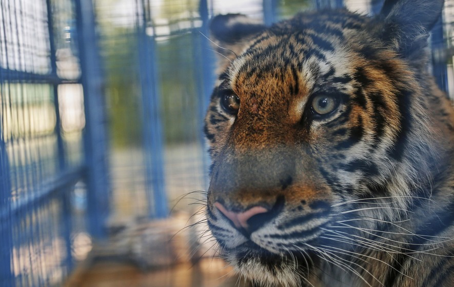 Animals rescued from Aleppo zoo in Syria after neglect during civil war