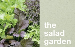 The Casual Gardener: Joy of vegetables