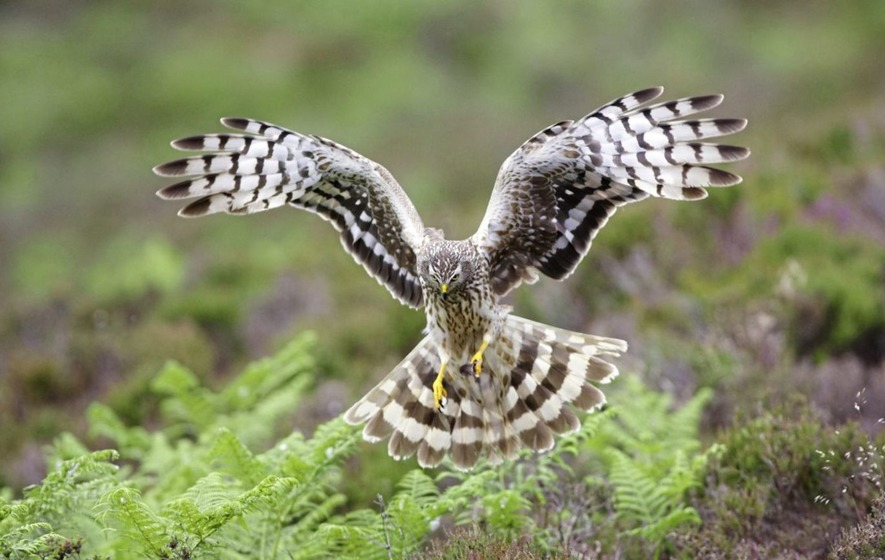 Take on Nature: Growing concerns about one of our most wonderful birds of prey