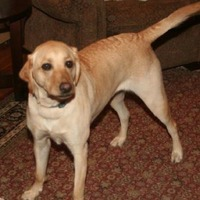 A New Jersey floor fitter gives an Employee of the Week award to all the dogs he works with
