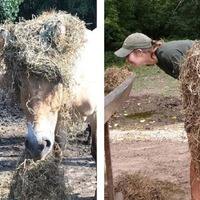 A team of zookeepers posed as the animals they look after and it's genius