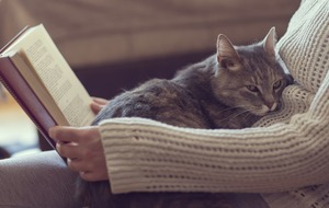 It's International Cat Day – and here are 7 scientific reasons why life is better as a cat person