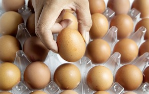 EU plans talks as egg scandal hits 17 countries