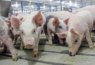 £10m deal to export NI pork to China