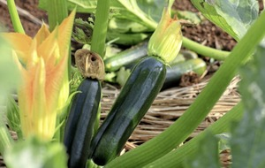 Gardening tips to get the most out of your vegetable patch