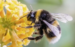Gardeners cultivating a buzz