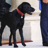 Emmanuel Macron has a new dog and he's a seriously good boy