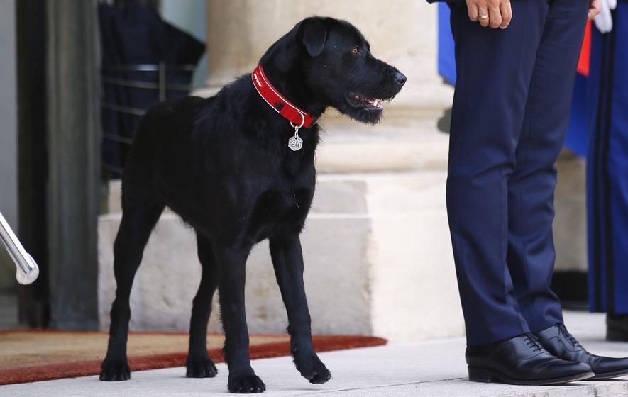 Emmanuel Macron Has A New Dog And He S A Seriously Good Boy The Irish News