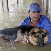 12 times dogs were lovingly rescued during Hurricane Harvey