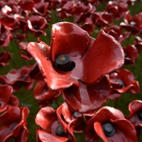 A new website wants to show the location and story behind each Tower of London poppy