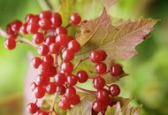 Gardening: Three of the best bushes for berries