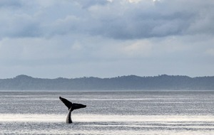 More than just a fluke: Hervey Bay the place to go for humpback whale watching