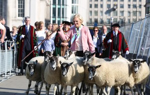 Tourists flock to see Mary Berry drive sheep over London Bridge