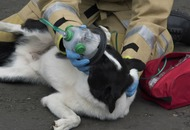 Tiny oxygen masks to help pets will be carried by fire crews in Merseyside