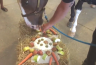 This police horse was given the epic retirement meal he deserves