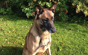 Police dog caught a murderer who escaped from prison guards during a hospital visit in Co Derry