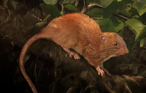 Scientists have finally tracked down a mysterious giant rat that lives up trees