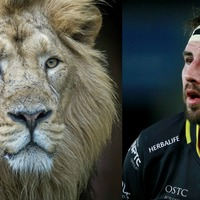 This rugby player learned the hard way not to pet a lion
