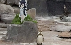 Nuala McCann: Little Grape's late-found love and sad demise inspire memories of penguins past