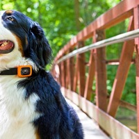 Motorola has launched a wearable for your dog