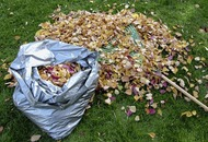 Gardening guide: Don't waste your autumn clean-up – make leafmould