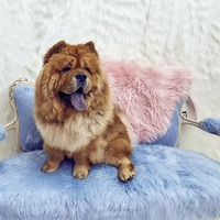 Welcome to the Fluffytorium: A sanctuary for all things fluffy
