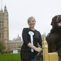 Watch: Rocky the chocolate Labrador wins Westminster Dog of the Year 2017