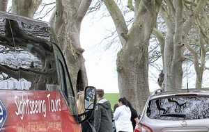 Traffic ban on Dark Hedges route comes into force