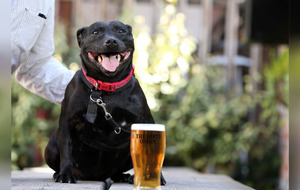 Dog friendly fundraiser in The Dirty Onion in Belfast to help Lucy's Trust
