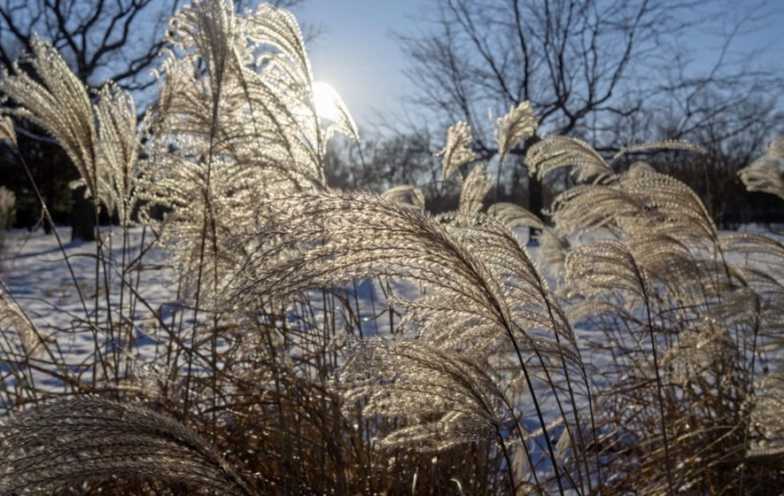 The casual gardener ornamental grasses are great for winter the a group of plants whose appeal increases as the weather gets colder sounds too good to be true but john manley reckons ornamental grasses fit the bill workwithnaturefo