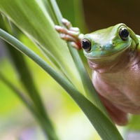 This app can identify frogs by the sound of their call