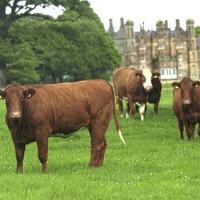 Glenarm beef scoops national farm award