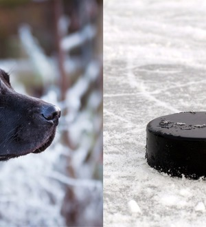 A black labrador dropped the puck at an NHL game and everyone agreed he did a great job