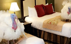 The turkeys due to be pardoned by Trump had a luxury hotel stay before their big day