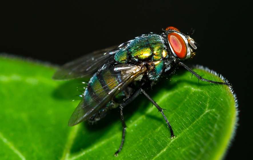 Houseflies could spread disease between humans, scientists warn ...