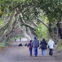 Charity watchdog rejects complaint against Dark Hedges group