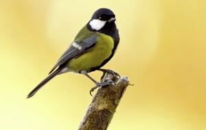 Environment: Report reveals the effect of a changing climate on birds in Northern Ireland
