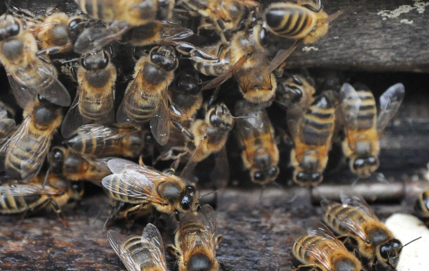 AI uses bee-like 'swarm thinking' to correctly predict Time