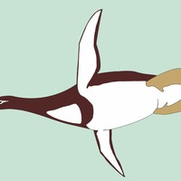 Giant penguins as big as humans may have waddled around Earth 59 million years ago