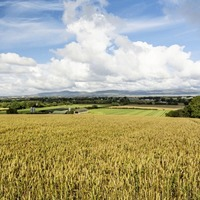105-acre arable and livestock farm in Eglinton on sale for £1.15m