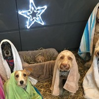 Your festive season just got a whole lot better with this adorable Nativity scene with dogs