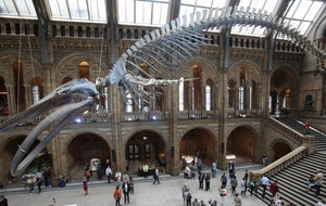 The Natural History Museum is making its archive digital