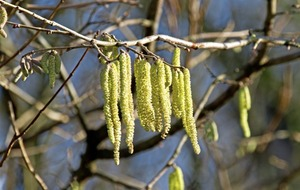 Outdoors: Spring coming four months ahead of 'normal' according to Woodland Trust